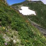 白馬岳直下、色とりどりの高山植物が♥