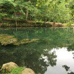 美瑛の青い池が台風の影響で濁った代わりに、急に青くなったらしい鳥沼公園の池 (美瑛の青い池も補修工事が終わって一般公開を再開しました)