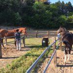 早朝のお馬さん見学ツアー