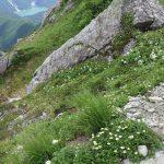 登山道脇、基本お花が咲き乱れまくり。至福。
