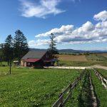 美瑛北西の丘公園の、ビニールハウスの裏にある、こんな素晴らしい風景とcafe biei(今年open