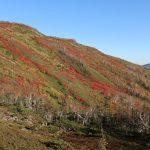 今年の大雪の紅葉はイマイチ(去年が超当たり年だった)、でも今日は超いい天気! 赤岳への登り口が一番良かったかな。