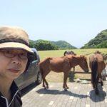 都井岬にて、水飲み場でうとうと仮眠中の御崎馬と俺