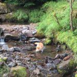 オーレン小屋前の川で遊ぶイッヌ。かわええ